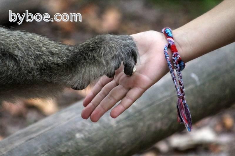Friendship Bracelet Knots
